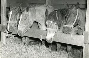 SS Cedar Rapids Victory caballos
